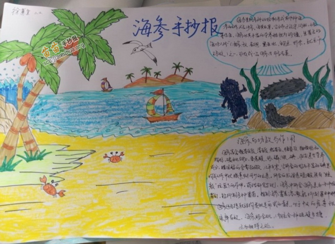 供二年级海参手抄报图片 海参,属海参纲(holothuroidea),是生活在海边
