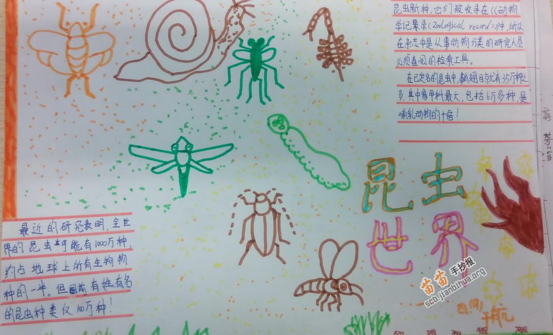 关于昆虫的手抄报图片大全 资料