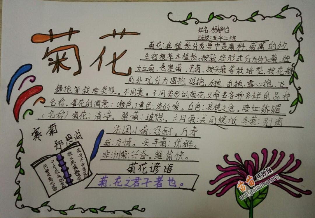 最短的季节_关于菊花的手抄报图片大全、资料