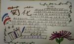 关于菊花的手抄报图片大全、资料