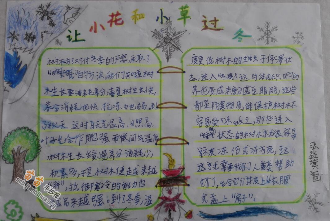 关于植物的手抄报图片