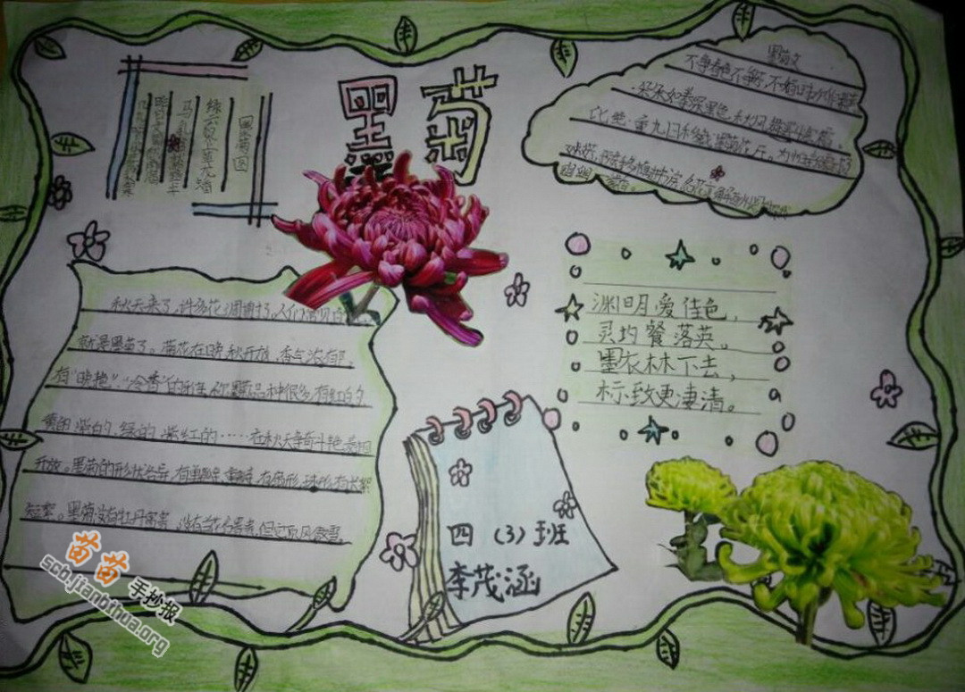 墨菊植物手抄报图片