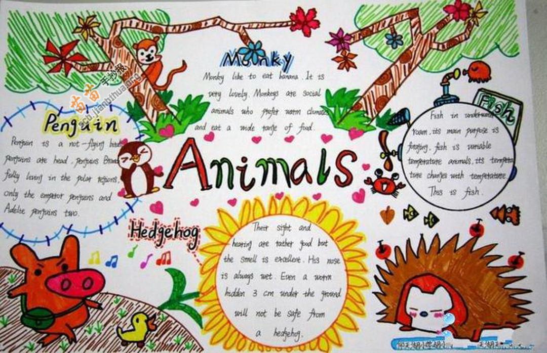animal world动物世界英语手抄报图片大全,内容