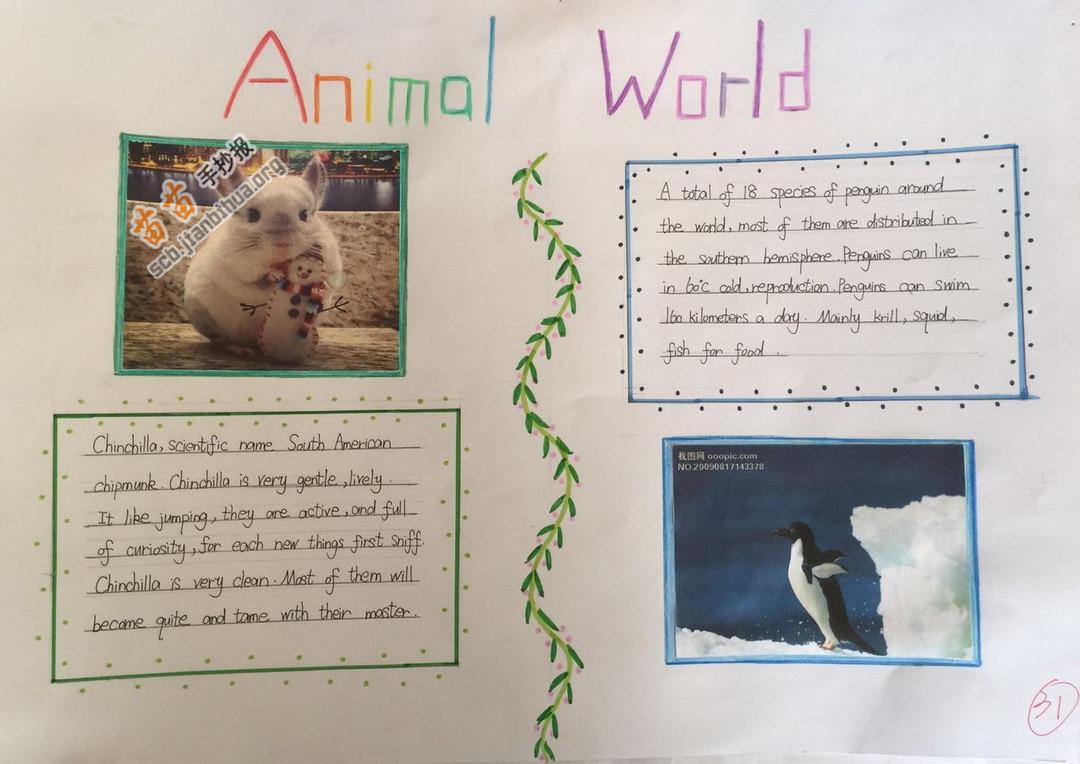 英语手抄报动物