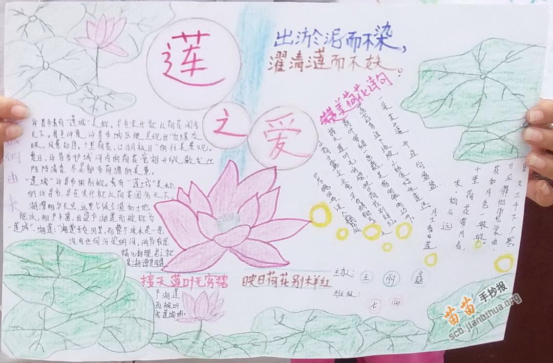 关于莲花的手抄报图片,资料