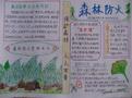 森林防火手抄报图片