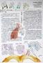 初二阅读手抄报设计图