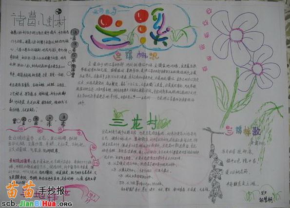 关于植物的手抄报
